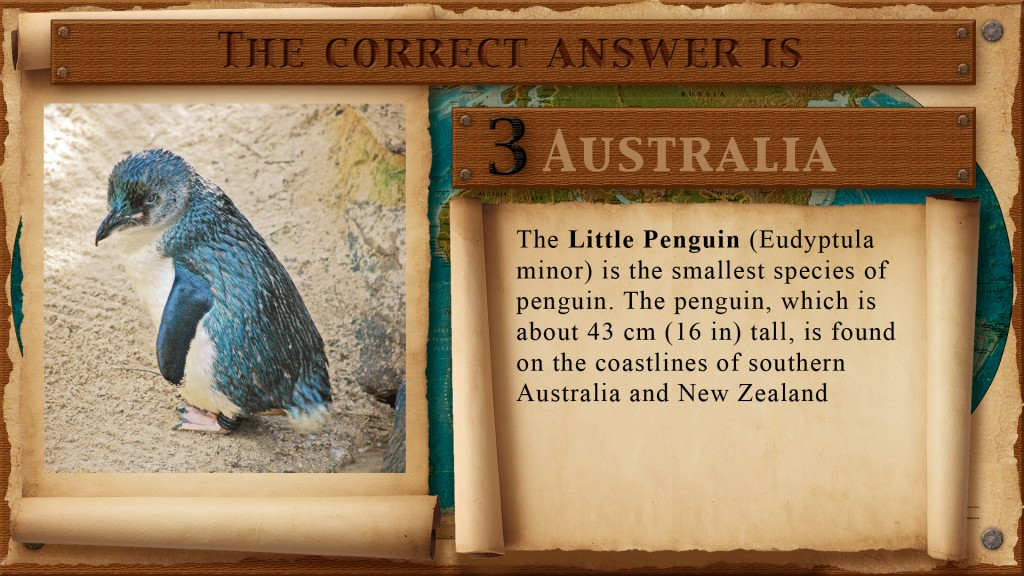 penguin-hide3